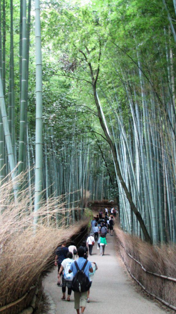 foresta bamboo arashiyama