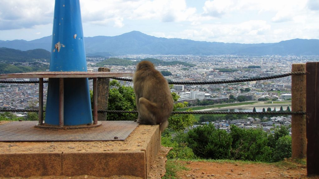 macaco con panorama