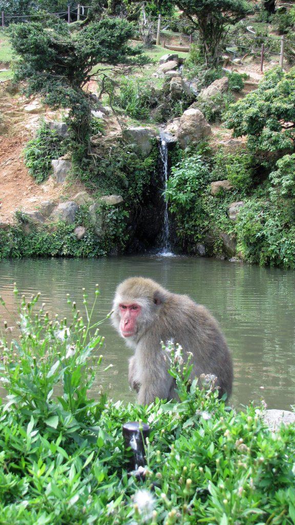 macaco al lago