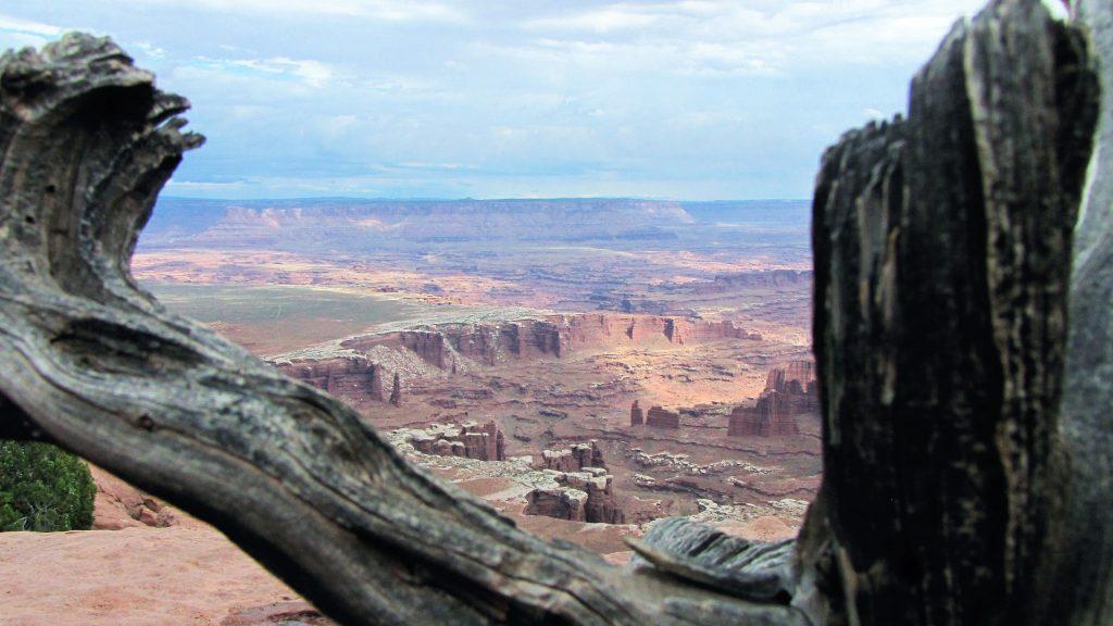 canyonlands da un tronco