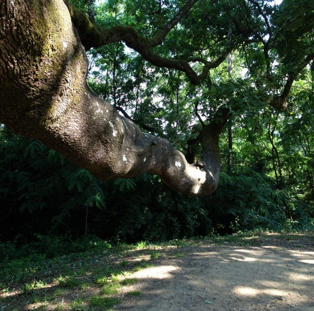 ramo del quercione
