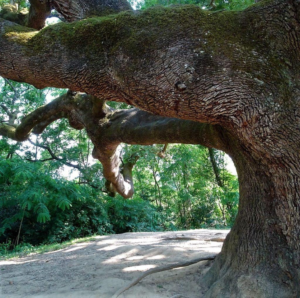 sotto il quercione